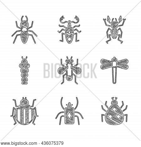 Set Insect Fly, Beetle Bug, Ladybug, Dragonfly, Colorado Beetle, Larva Insect, Deer And Ant Icon. Ve