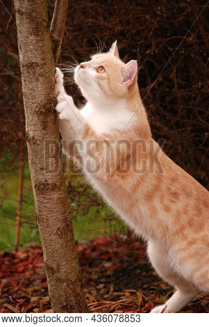 A Cat Is Scraping At A Tree Trunk.