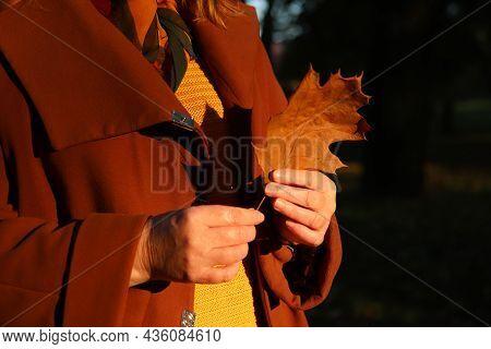 Female Hands Holding Oak Tree Leaf. Bright Stylish Woman In Orange Coat And Shawl Of Neck Walking In