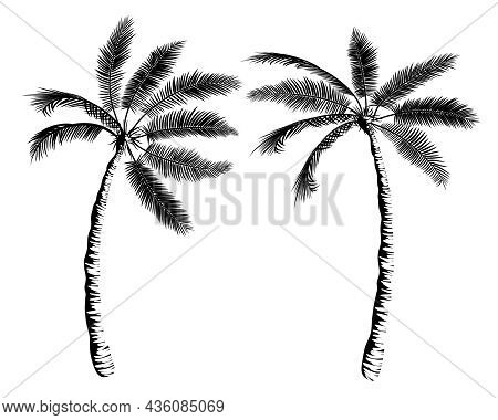 Two Palms Leaned Towards Each Other. Beautiful Tropical Composition For Banner, Print, Advertisement