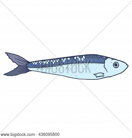 Blue Sardines. Hand-drawn In The Style Of A Sketch Of Small Sprat Fish, Blue-gray With A Blue Outlin