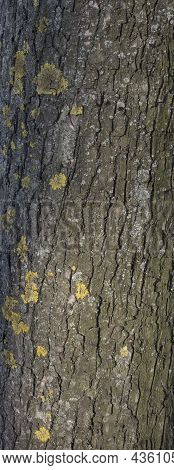 Mosses On The Tree Bark With Moss And Lichens