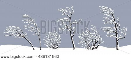 Set Of Snow Covered Young Trees And Bushes Without Leaves Isolated On Gray. Winter Season, Plants Du