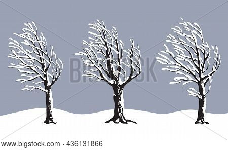 Set Of Old Snow Covered Trees Without Leaves Isolated On Gray Background. Winter Season, Windy Weath
