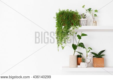 Plant wall shelf with blank space