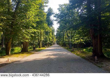 Picturesque Walking Road In The Park, Park, Forest