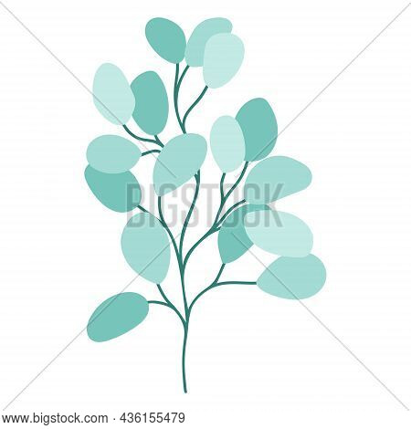 Eucalyptus Twig Drawn Isolated Botanical Element. Green Rounded Leaves On A Branch, Trendy Greenery