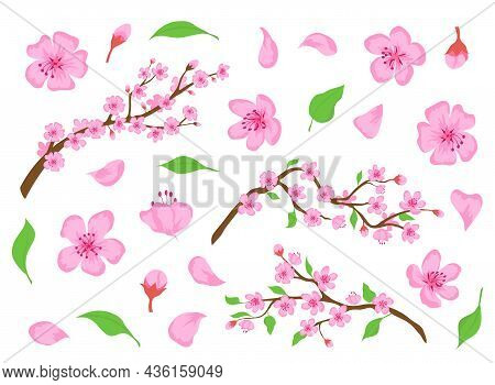Blossom Sakura Pink Flowers, Buds, Leaves And Tree Branches. Spring Japanese Cherry Floral Elements.