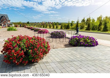 Beautiful Flowerbed With Blossoming Bright Red Petunia Flowers Along Green Cobble Paved Pavement Roa