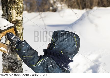 A Boy In Overalls Puts Seeds In A Bird Feeder, In Winter - In A Birdhouse On A Birch Tree