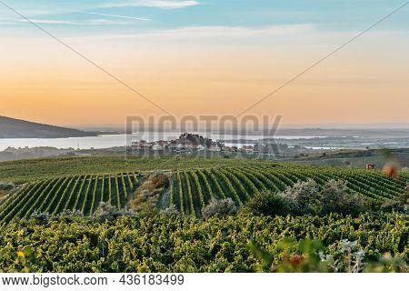 Vineyard Autumn Landscape In South Moravia,czech Republic.rows Of Vineyard Grape Vines,sunset Sky,za