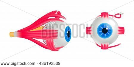 Colored Ophthalmology Poster With Isolated Front And Side View Of Human Eyeball On White Background