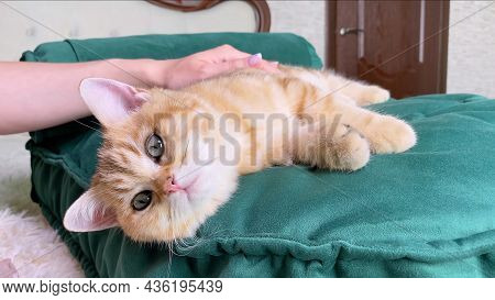 Female Hand Stroking Little Red Ginger Striped Kitten Lying On Green Cat Bed In Bedroom. Adorable Pe