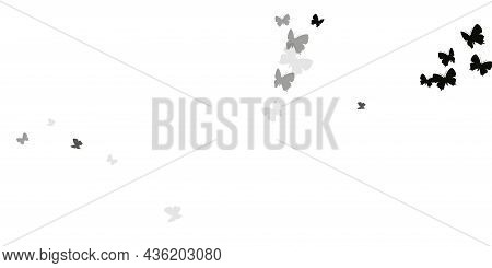 Romantic Black Butterflies Isolated Vector Illustration. Spring Colorful Moths. Fancy Butterflies Is