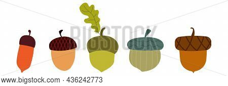 Thanksgiving And Autumn Acorn Icon And Illustration Set. For Mobile Concept And Web Design. Acorn An