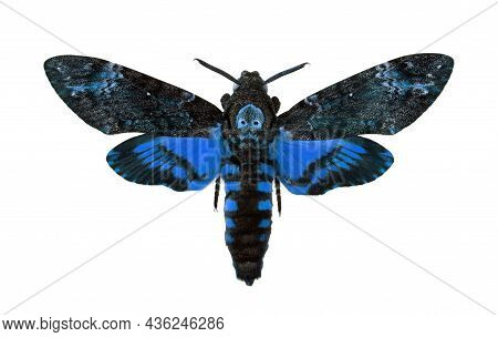 Death's-head Hawkmoth Isolated On A White. Acherontia Atropos. Large Rare Blue Moth.