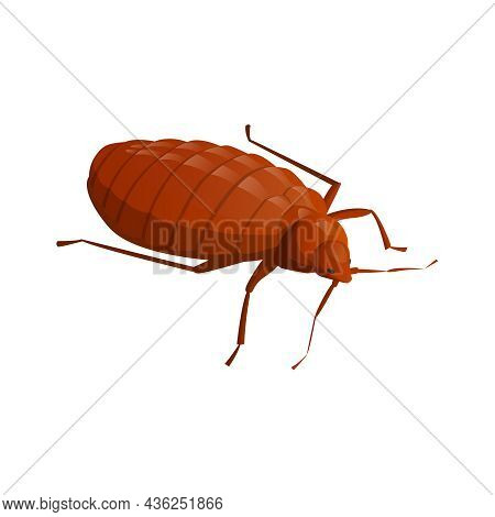 Brown Cockroach Isometric Icon On White Background Vector Illustration
