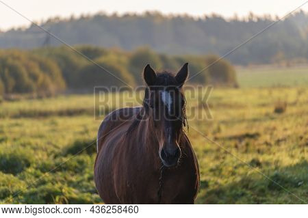 Work Horse In Beautiful Autumn Landscape In Sunny Morning