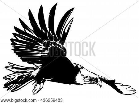 Flying Bald Eagle - Black Illustration Isolated On White Background, Vector