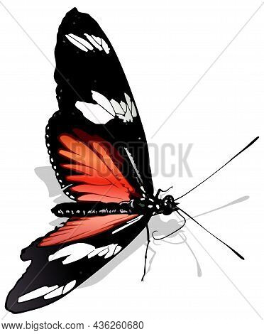 Postman Butterfly - Beautiful Colorful Tropical Butterfly Heliconius Melpomene Isolated On White Bac
