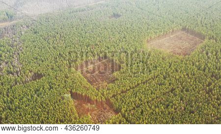 Aerial View Green Pine Forest Deforestation Area Landscape. Top View Of Growing Forest Near Empty La