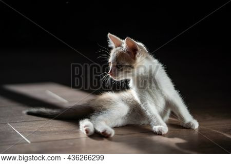 Cute Little Lazy Tired Tabby Cat Relaxing Enjoy Lying, Napping And Dreaming