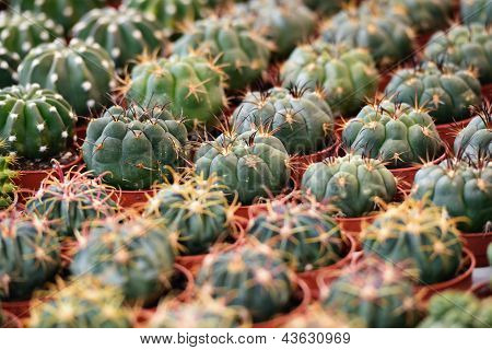 Succulent Plants To The Flower Market, Selective Focus