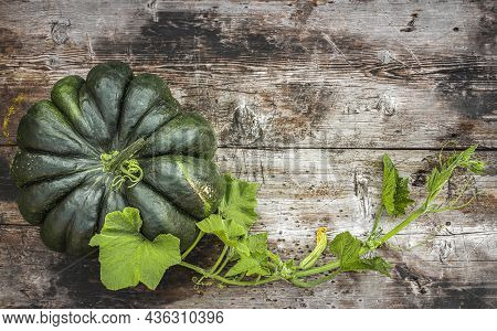 Green Flattened Segmented Pumpkin On A Wooden Surface With A Stem And Flower Bud.