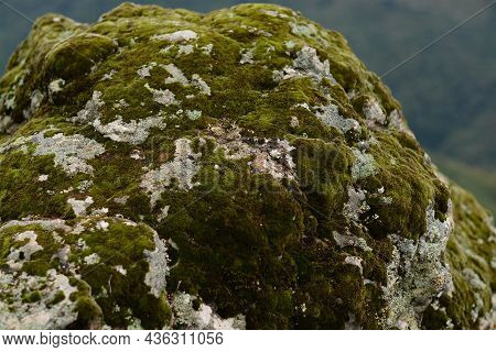 Moss On The Stones In The Forest. A Stone Covered With Green Moss In The Depths Of The Forest. Pictu