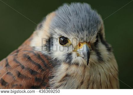 Birds Nature Animals, In, The, Wild, Birds, Flyers, Of, Forests, And, Meadows, Photos, Prey, Predato