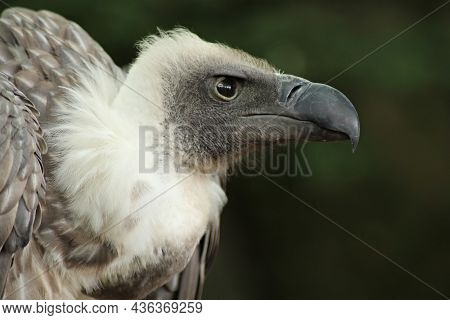 Birds  Nature, Animals, In, The, Wild, Birds, Flyers, Of, Forests, And, Meadows, Photos, Prey, Preda