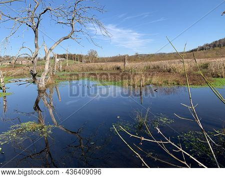 A Flooded Area At Gupton Wetlands, Roane County, Tva Lakeshore Park