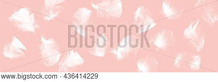 Creative Pink Background With White Feathers. Abstract Backdrop Of Swan Feathers. Minimal Concept.