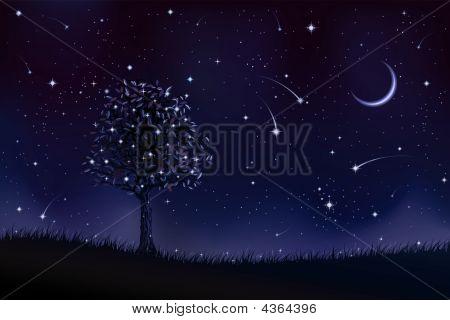 Lone Tree At Night