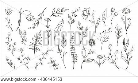 Doodle Forest Plants. Hand Drawn Simple Flowers. Foliage And Wood Ferns. Decorative Floral Sketch. E