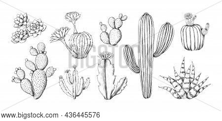 Cactus Engraving Sketch. Hand Drawn Western Desert Plant With Blossom And Spikes. Doodle Tropical Fl