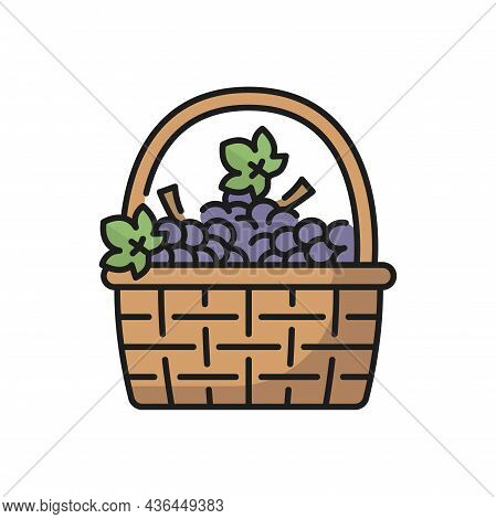 Basket Of Purple Grapes Isolated Line Icon. Vector Vintage Basket With Bunches Of Isabella Grapes Wi
