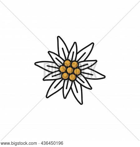 Alps Edelweiss Flower Isolated Meadow Blossom Line Icon. Vector Wildflower Growing In Mountains, Nat