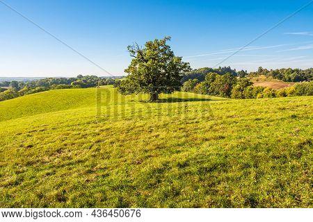Landscape With Paddock And Trees Near Hohen Demzin, Germany.