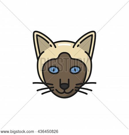 Cat Animal Face Portrait, Siamese Kitten Isolated Color Line Icon. Vector Asian Thailand Feline Dome