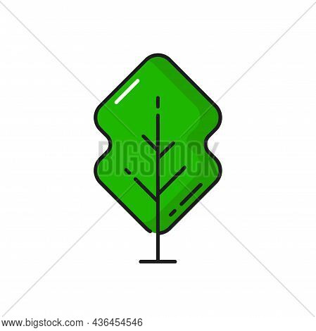Green Forest Tree Plant Isolated Outline Icon. Vector Landscape And Garden Architecture Element, Bot