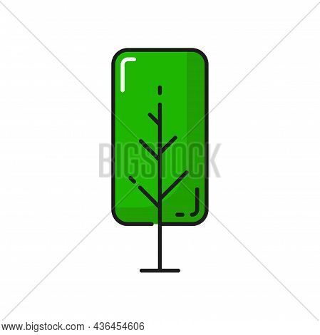 Green Birch Tree Isolated Thin Line Icon. Vector Natural Botanical Outline Plant, Clean Environment