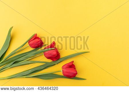 Three Red Tulips On A Yellow Background. Spring Flowers. Free Space For Text. Spring Vibes.