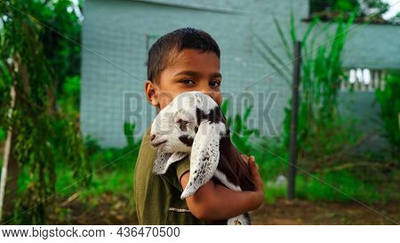 Cute Indian Boy With Baby Goat Lings, Countryside Outdoor Portrait, Forest, Trod, Glade Background.