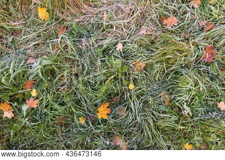 View From Above. Green Grass With Yellow Autumn Leaves. Autumn Background, Texture. The Grass Is Cov