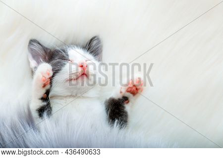 Little Happy Kitten In Sleep Lift Up Paws Showing Pink Paw Pads On White Fluffy Plaid. Cat Comfortab