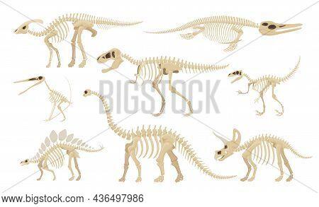 Dinosaur Skeleton Set Vector Illustration Dino Skeletons, Dinosaurs, Fossils, Skull And Bones