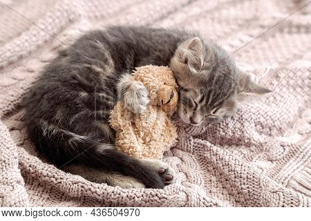 Little Cat Sleep On Cozy Blanket Hugs Toy. Fluffy Tabby Kitten Snoozing Comfortably Hug Teddy Bear O