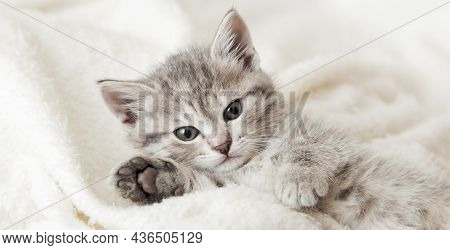 Cute Tabby Kitten Portrait With Paw Sleeping On White Soft Blanket. Cat Rest Napping On Bed. Comfort