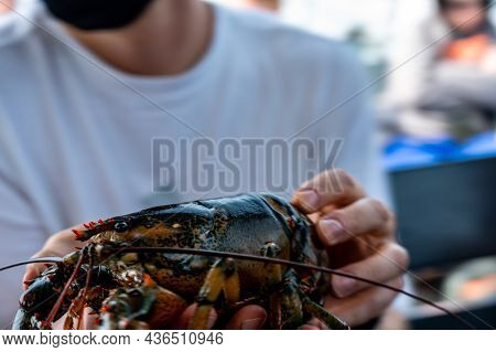 Captive Lobster Being Held By A Tourist On A Atlantic Boat